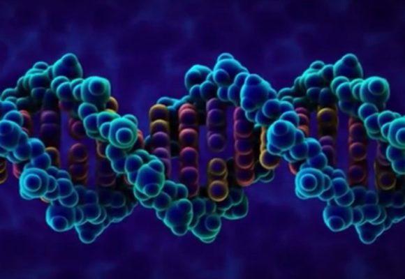 GENETICA E AMBIENTE